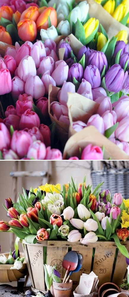 GH_Tulips2